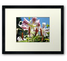 Lily Flower Closeup Floral art prints Pink Lilies Framed Print