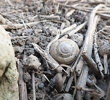 Mollusk Tombstone by BioticCrisis