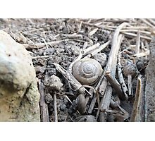 Mollusk Tombstone Photographic Print