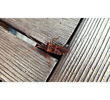Wood Insect Photographic Print