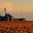 Sunflower Farming by Katagram