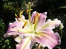 Floral Lily Flower Photography prints canvas Pink Lilies by BasleeArtPrints