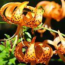 Orange Tiger Lily Flowers art prints Lilies Garden by BasleeArtPrints