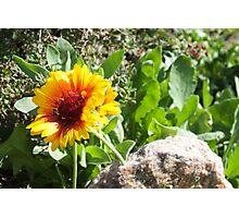 Sunshine Flower Photographic Print