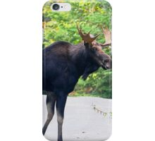 Maine Bull Moose on the road iPhone Case/Skin