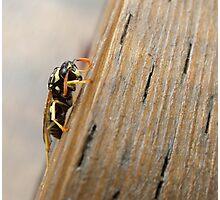 Depressed Wasp Photographic Print