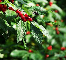 Berry Berry Nice ;-)  by Marcia Rubin