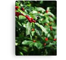 Berry Berry Nice ;-)  Canvas Print