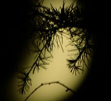 Alone in the forest by moonlight by Steve