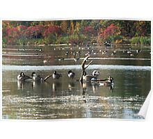 Geese pond Poster