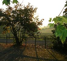 Autumn morning shadows by lezvee