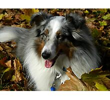 Sammy In The Leaves Photographic Print