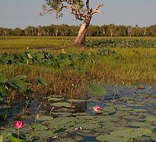 South Alligator River, Kakadu National Park, Australia by Erik Schlogl