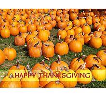 Pumpkin Patch Thanksgiving Photographic Print