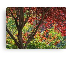 autumn window in Japanese Garden Canvas Print