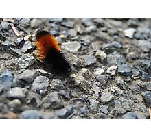 Caterpillar Photographic Print