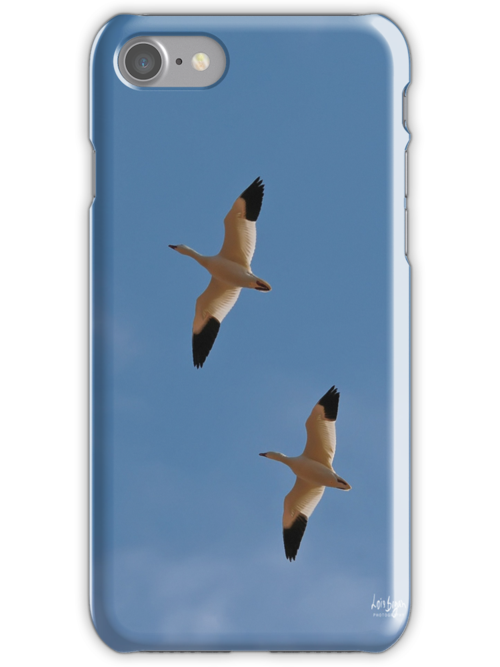 Snow Geese iPhone Case by Lois  Bryan