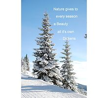 Fir Tree In Snow Photographic Print
