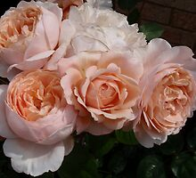 Roses from my garden by flowerbilia