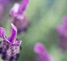 Lavender Skies by Josie Eldred