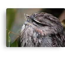 tawny frogmouth Canvas Print