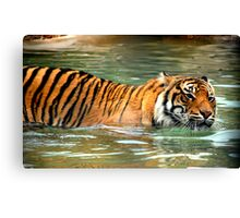 cats do love the water Canvas Print