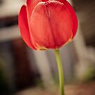 Faded Tulip by TyTheTerrible