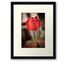 Faded Tulip Framed Print