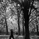 Dark trees by Nayko