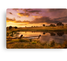Queensland Country Sunset Canvas Print