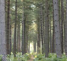 Stapleford woods  by crazyman53