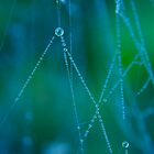 Autumn Web by Sophie Watson