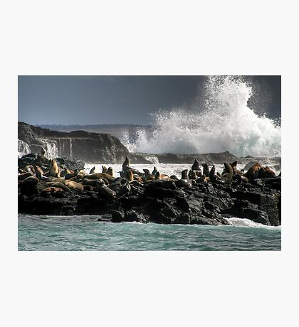 Seal Rocks, Phillip Island Photographic Print