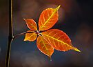 Autumn Leaf by Darren Burroughs