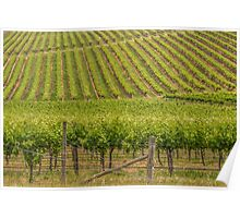 Vineyards 4 Poster