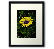 Strong and alone Framed Print