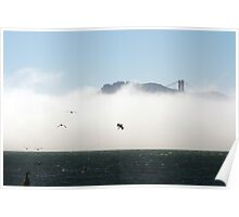 Pelicans fishing at Golden Gate Bridge Poster