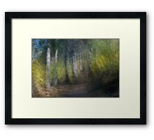 Trees Along the Path Framed Print