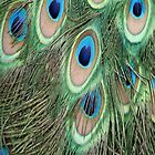 Peacock 'eyes' by Susan Leonard