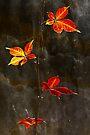 Autumn Leaves textured Print by Darren Burroughs