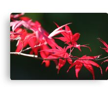 flames of fall Japanese Garden  Canvas Print