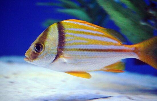Fish by venny