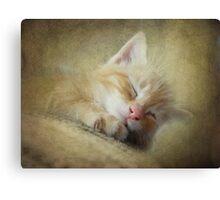 Soft Kitty, Warm Kitty, Little Ball of Fur Canvas Print