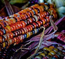 indian corn by Andrew Bloom