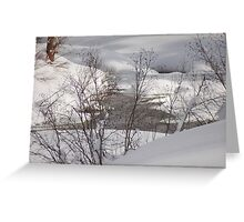 Willows in Snow Greeting Card