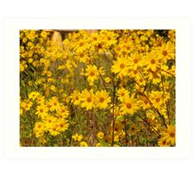 yellow flowers in a tuscan field(italy) Art Print