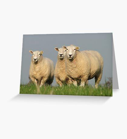 Curious Lleyn Sheep Greeting Card