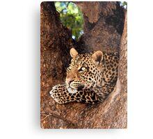 Leopard, Mashatu, Botswana Metal Print