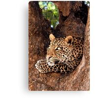 Leopard, Mashatu, Botswana Canvas Print