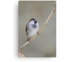 Sparrow, County Kilkenny, Ireland Canvas Print